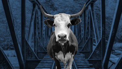 A cow stands on a bridge
